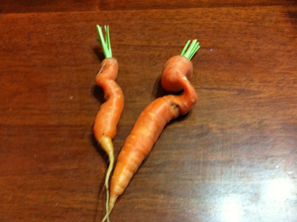 If a carrot meet a carrot coming through the rye, if a carrot meet a carrot, need a carrot cry?  Every carrot has a carrot, none, I say have I - but all the carrots smile at me a-coming through the rye.