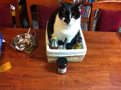 Instead, I will feel guilty for being the sort of cat-mother who, finding a cat in her curry hamper, thoughtfully starts stacking the curry ingredients in around her, so that she can photographed said cat. ... yeah, that's a total lie.  I don't feel guilty about this at all.